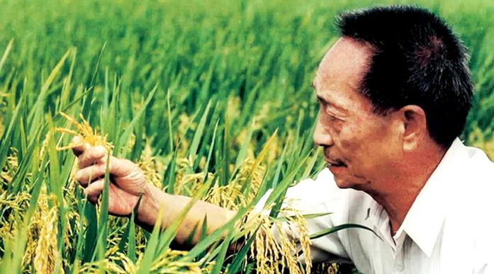 """Yuan Longping """"super rice"""" 1026.7 kilograms per mu"""