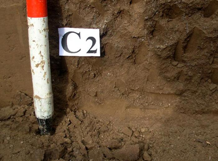 土壤中消失的矿物质和我们的健康