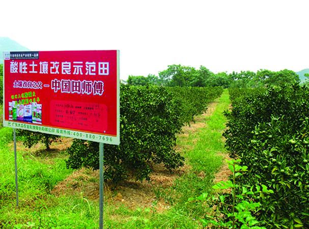The thick orange tianshifu 'Nostalgia' Paul harvest