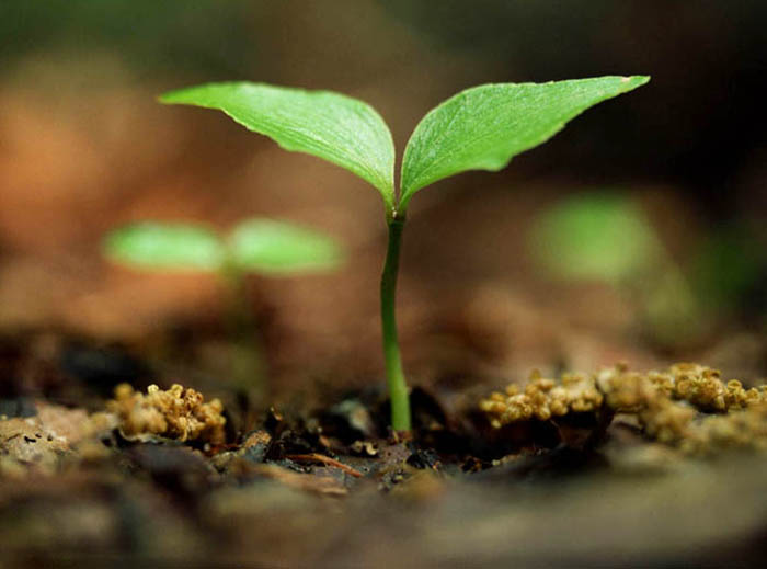Function and cultivation of soil microorganism