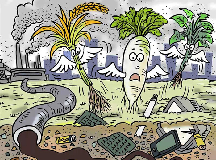 Damage and treatment of heavy metal pollution in soil