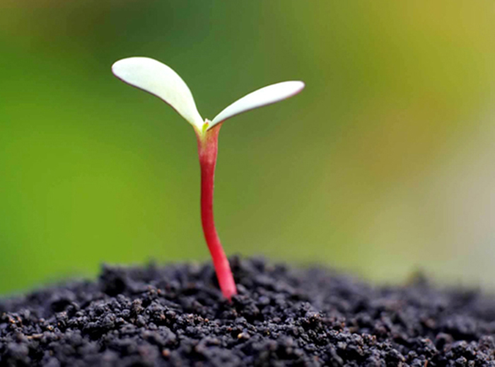 Effect of soil organic matter on soil fertility
