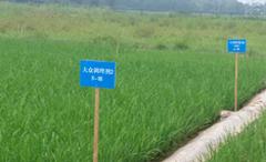 '田师傅'土壤调理剂硅钙镁钾在重金属污染修复试验基地示范效果显著